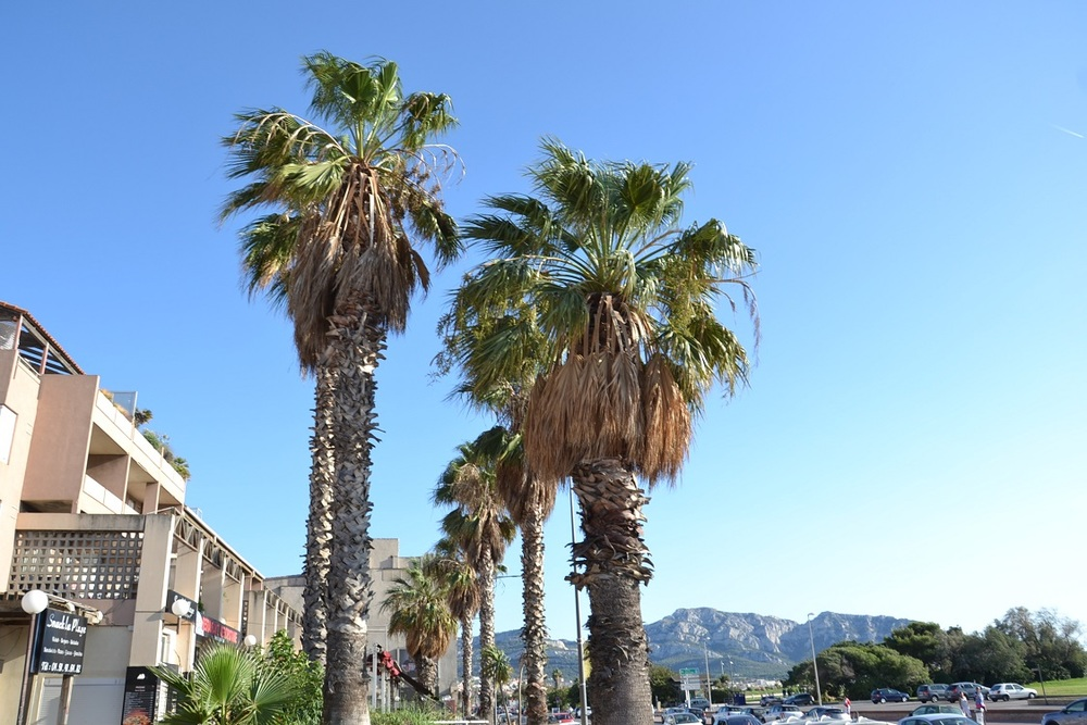 Prado Plaza - MARSEILLE 13008